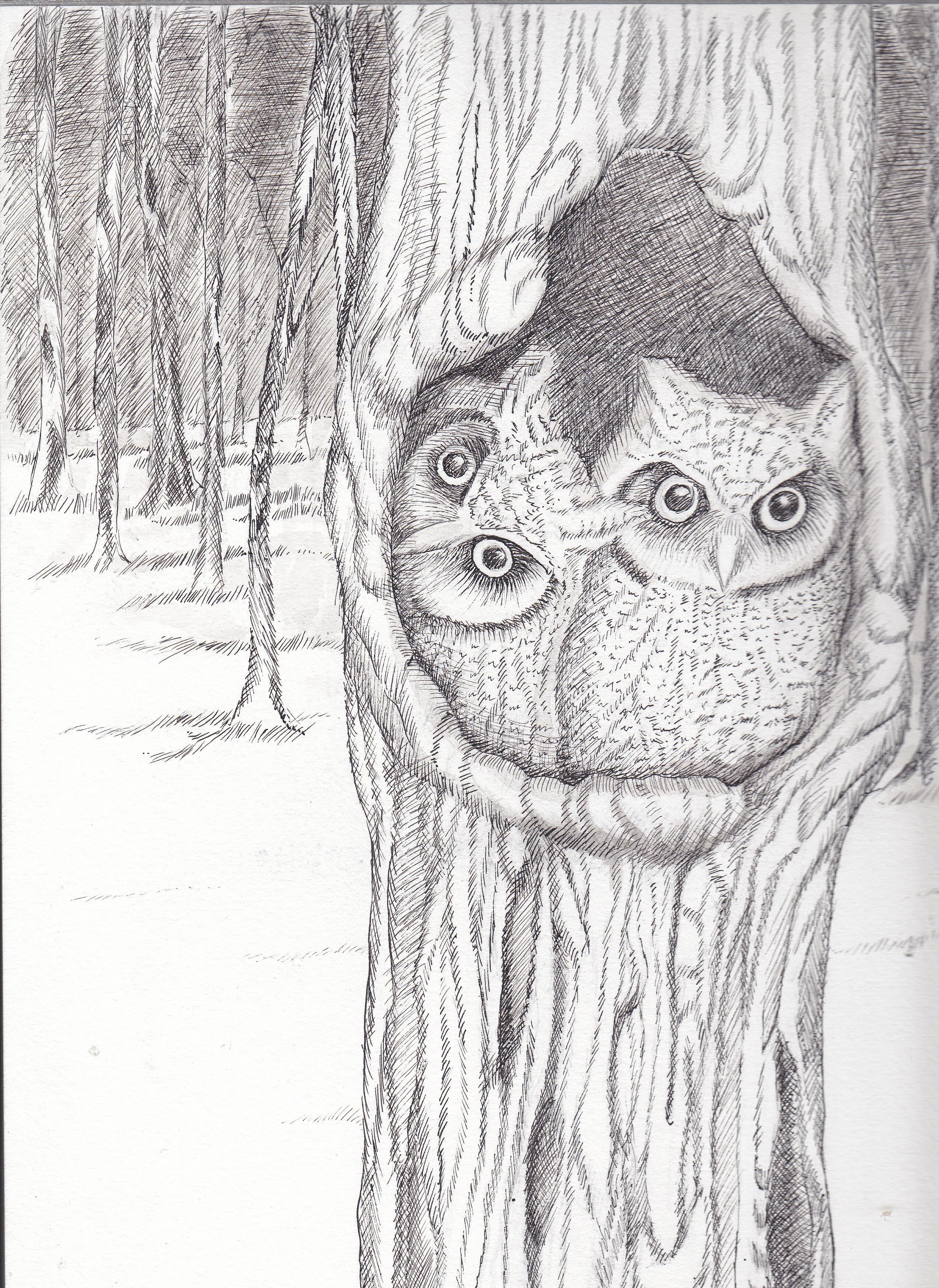 drawings deanne hall habeeb u0027s gallery