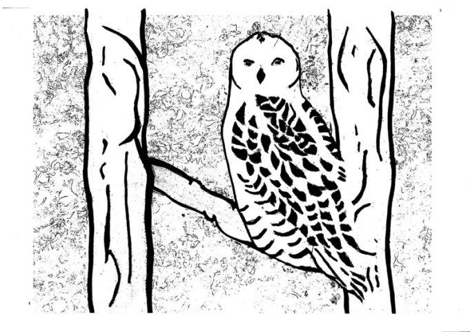 Snowy Owl Pattern